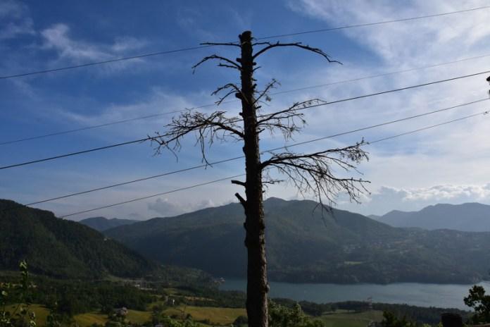 albero secco al lago suviana