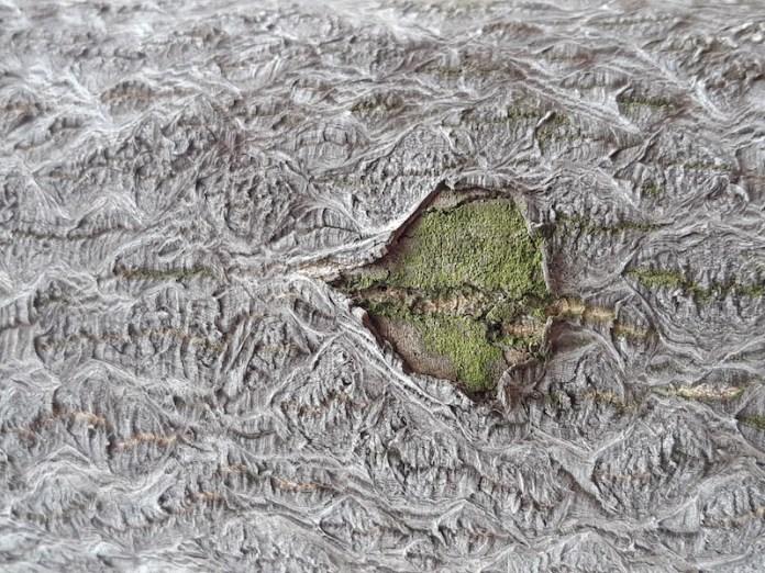 Bioricami - Parco Naturale delle Sorgenti del Lavino