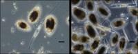 """Microalghe tossiche: monitoraggio ARPA Lazio con il """"metodo della siringa"""""""