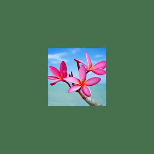 Plumeria Fragrance Oil ( Size A - 1/4 ounce)