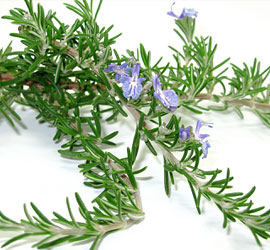 Rosemary Oil Extract