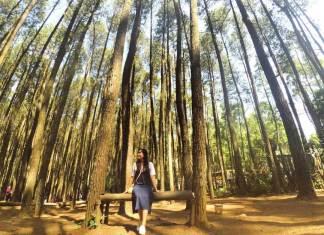 Hutan Pinus Jogja Imogiri Untuk Anda Yang Ingin Menikmati Udara Segar