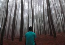 Hutan Pinus Yogyakarta Mempesona Semua Wisatawan Yang Berkunjung