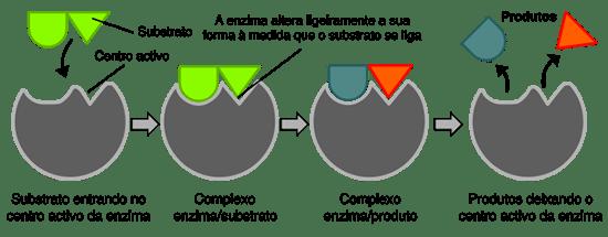 Resultado de imagem para enzimas chave fechadura