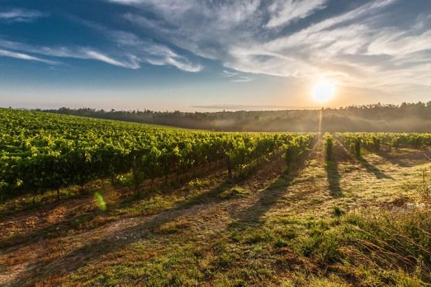 producción de vino italiano