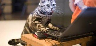 gato adiestrado