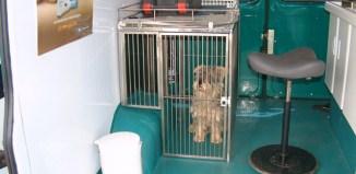 veterinaria movil