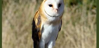 Aves-Cuidados