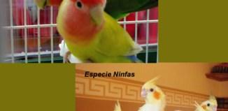 Aves-Exóticos