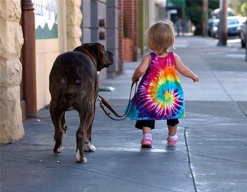 Sobre mascotas