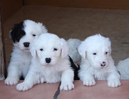 adopcion de mascotas