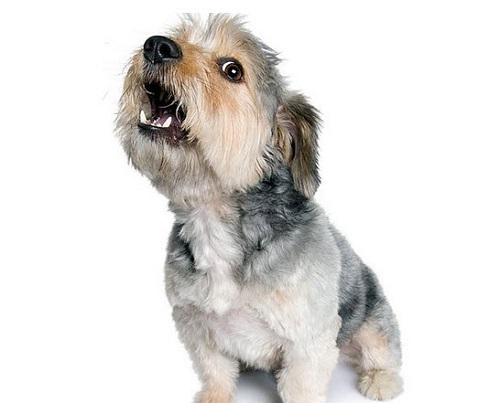 perro-ladrando-acustica