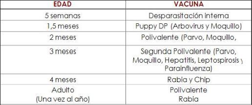 Calendario Vacunas Perros.La Vacunacion De Perros Calendario Y Vacunas