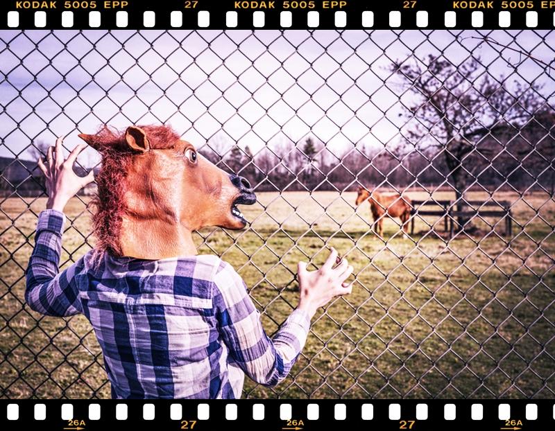 horse_face2