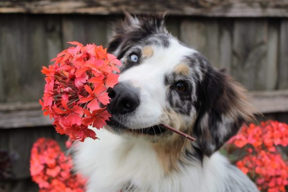 happy_dog_with_flowers