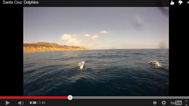 VIDEO: Santa Cruz Dolphins