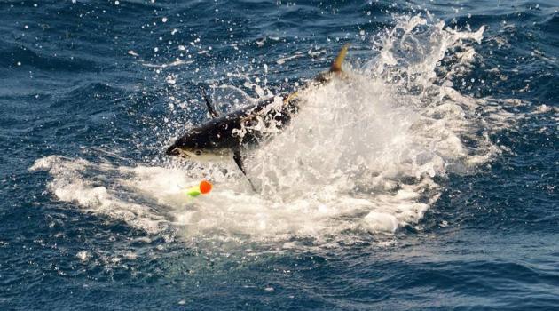 Brian Dunham for Thunderbird Sportfishing