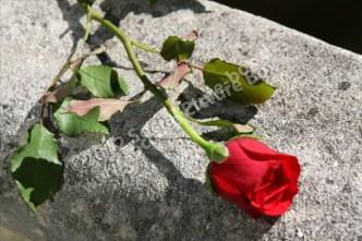 Rosen - Liebe - Geschenk - Blume - Blüte -Stein - Deko