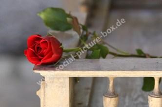 Rose - Balkon - Balustrade - Romantik