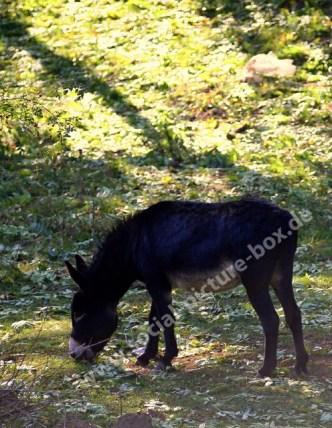 Natur Haustiere Esel