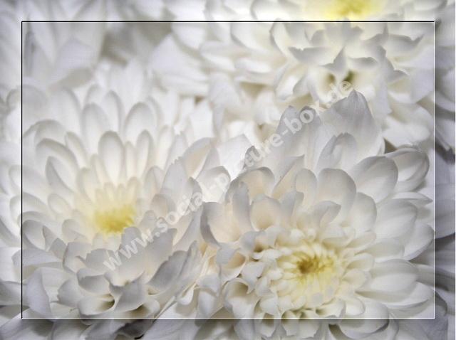 Blumen - Blüten - Weiß - Rahmen