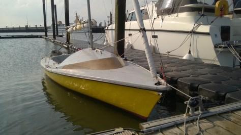 Hypsch: Polyp im Yachthafen Baltrum