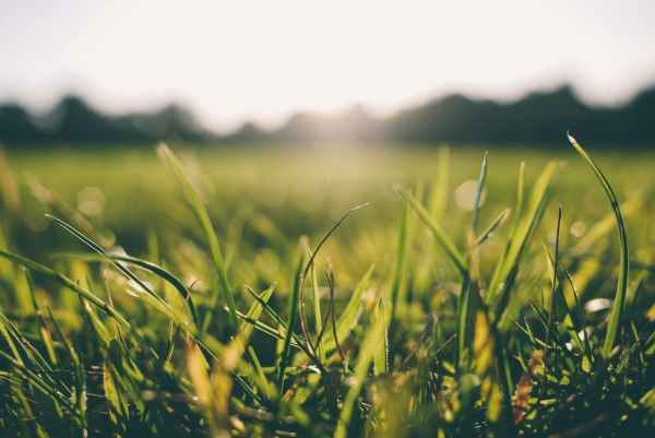 lawnmower, what makes cut grass smell?, smell of freshly cut grass