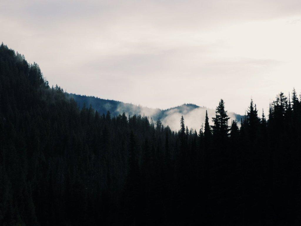 Mountain range, E.C. Manning Park, forest, woods,