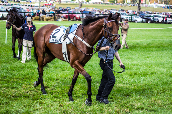 far hills horse race (12)