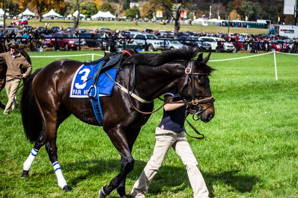 far hills horse race (14)