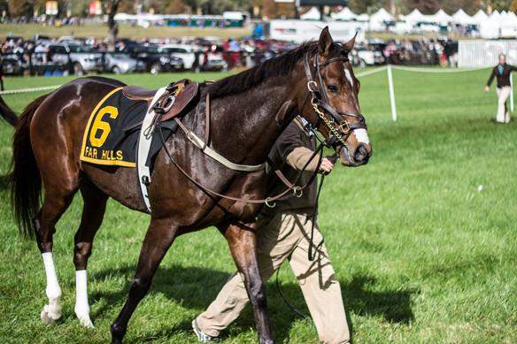 far hills horse race (18)