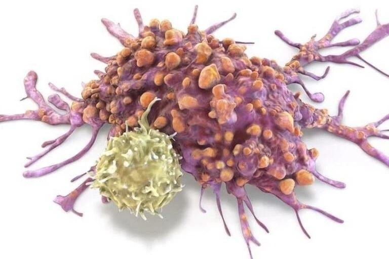El cáncer afecta al conjunto del reino animal pluricelular