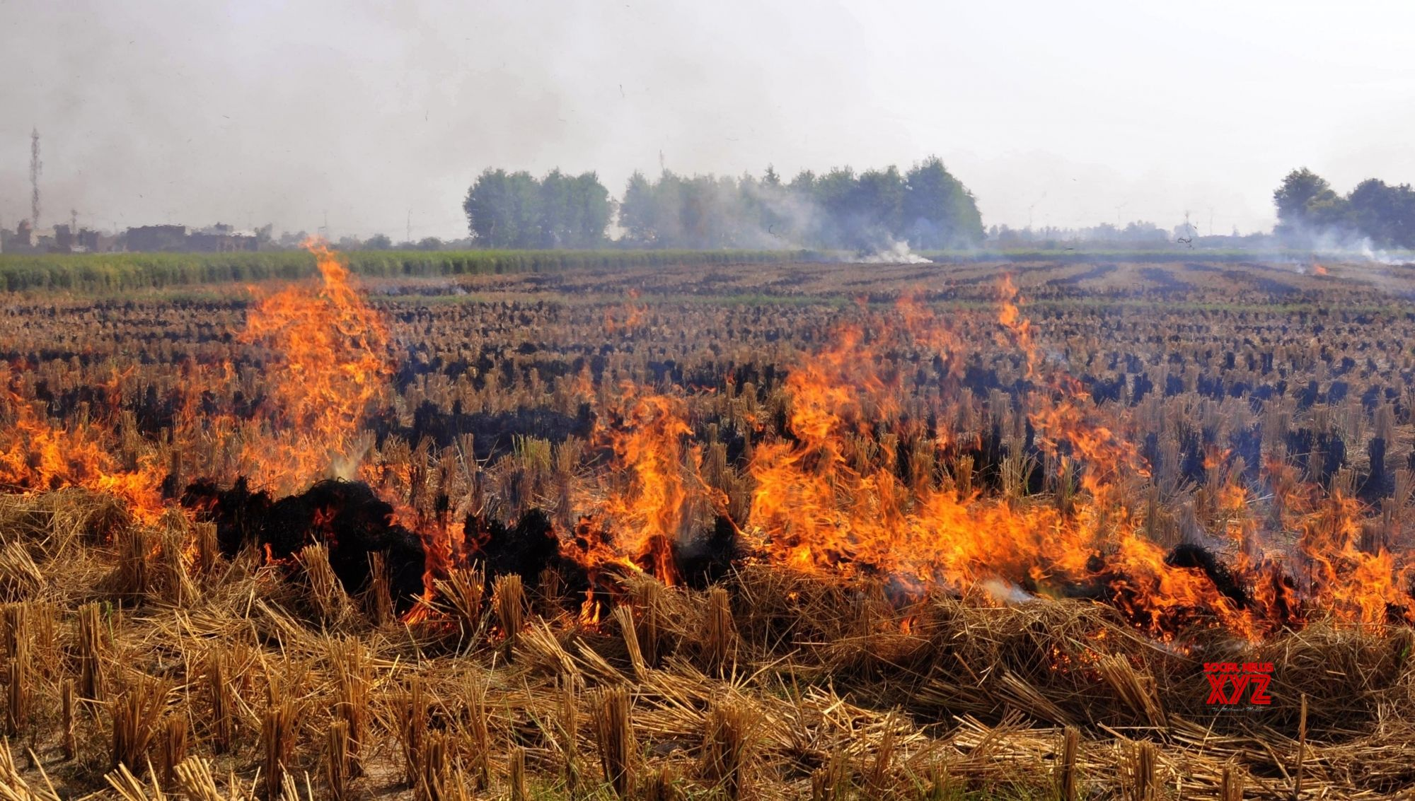 Punjab, the epicentre of crop burning fires, sees low pollution levels