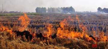 Amritsar: Stubble being burnt in a field on the outskirts of Amritsar on Oct 13, 2017. (Photo: IANS)