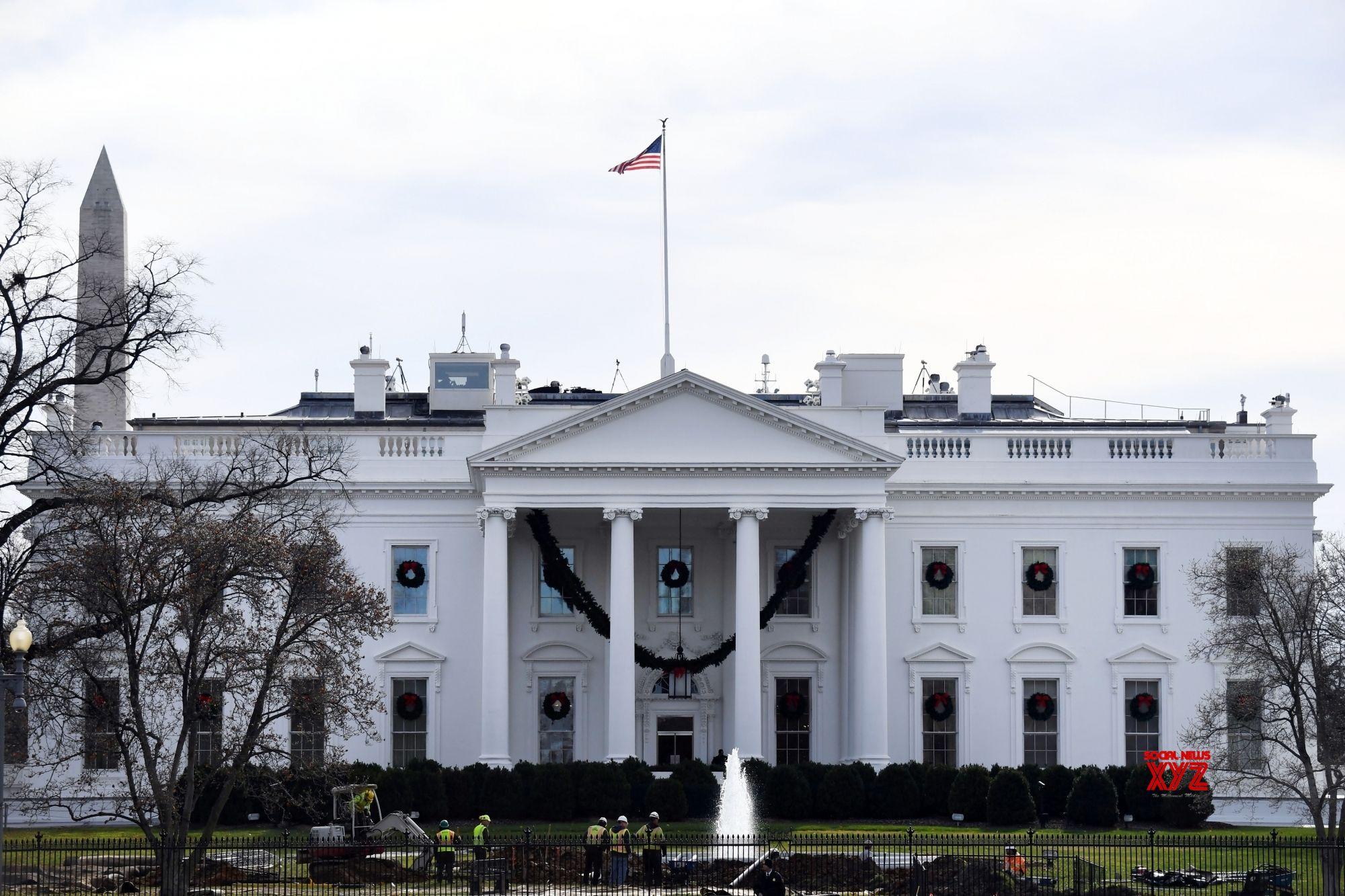 White Houses Iconic Magnolia Tree To Be Cut Down Social News Xyz