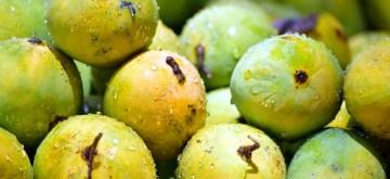 Mangoes. (File Photo: IANS)