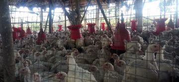 Poultry farm. (File Photo: IANS)