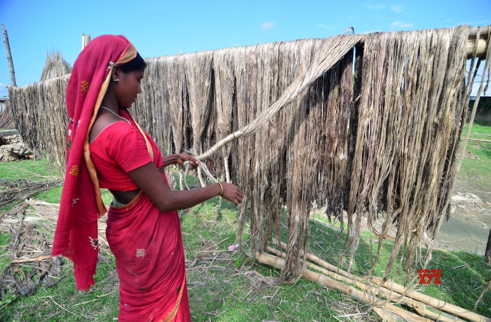 Cabinet approves MSP of Rs 3,950/quintal for raw jute