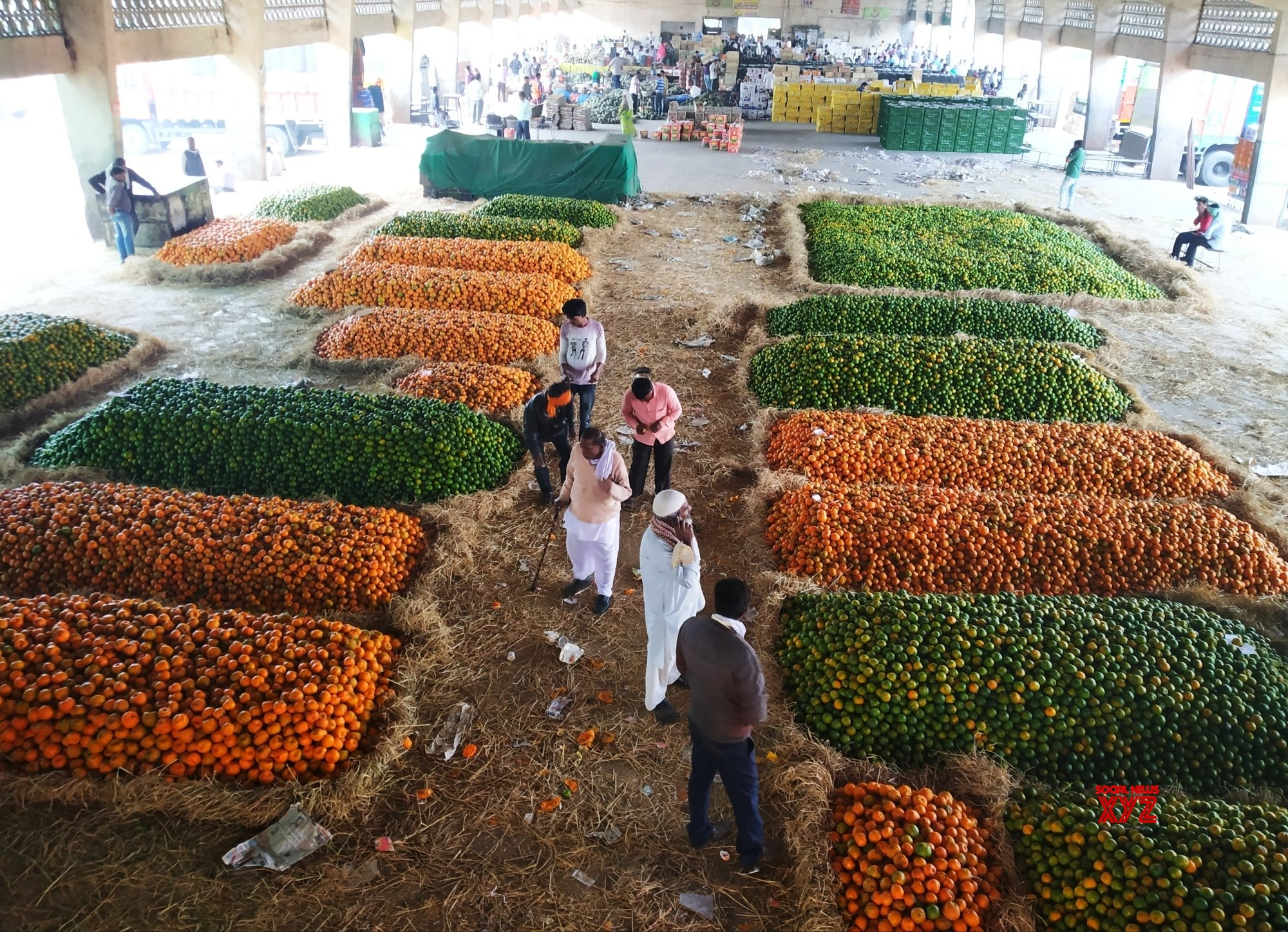 Nagpur: Wholesale market - Oranges #Gallery