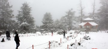 Shimla: Shimla receives fresh snowfall on Jan 25, 2019. (Photo: IANS)