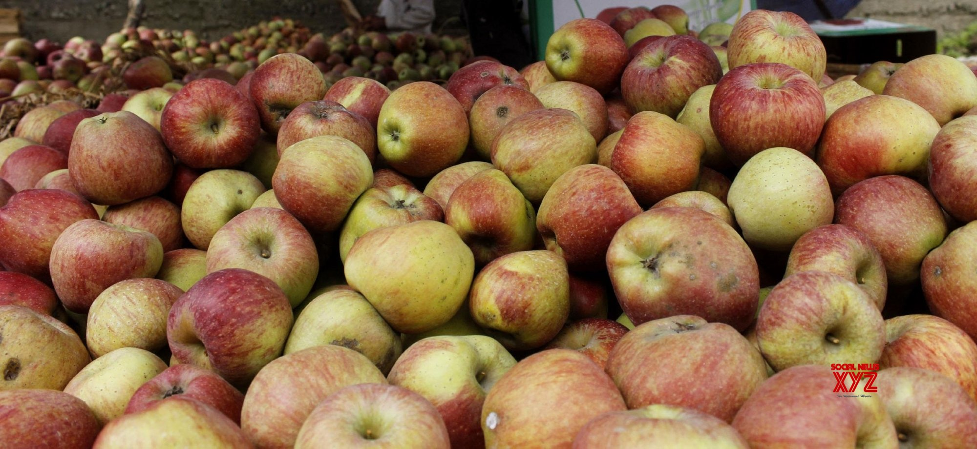 Himachal imports over 7 lakh apple roots to boost output