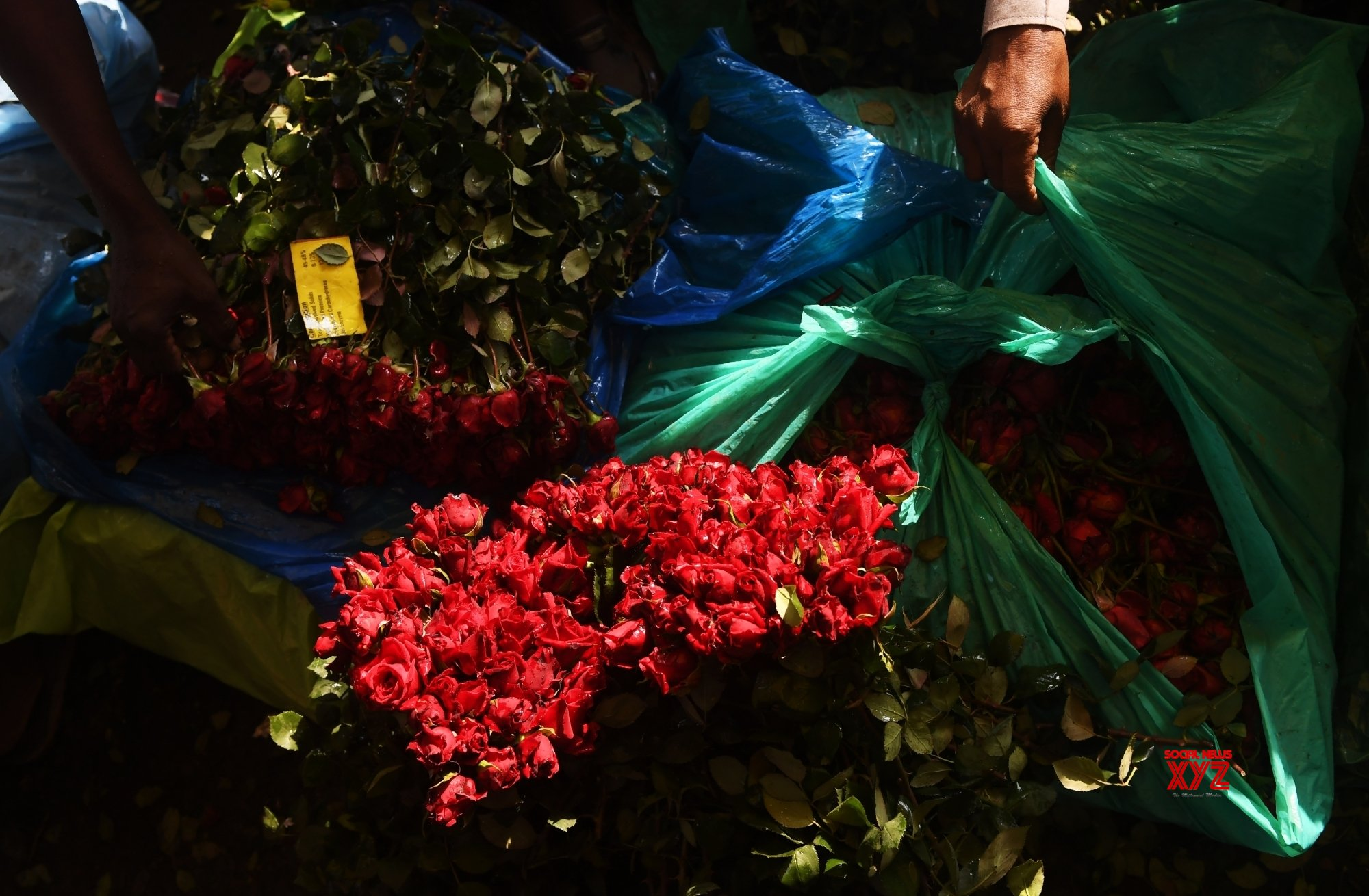 Kolkata: Flower market on the eve of Valentine's Day #Gallery