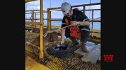 Dog rescued while swimming 135 miles off Thailand  (Video)