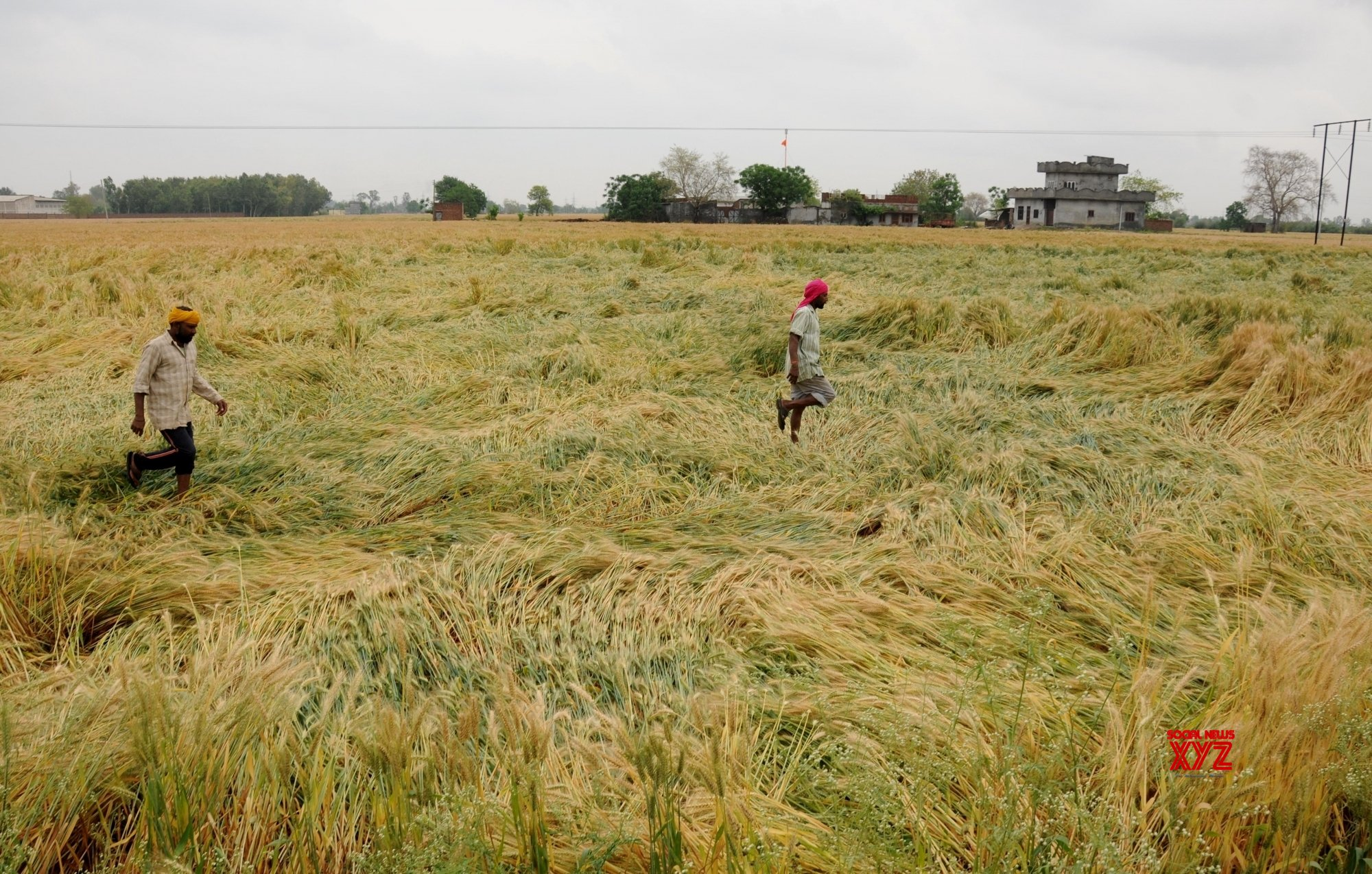 Punjab orders special survey to access crop damage