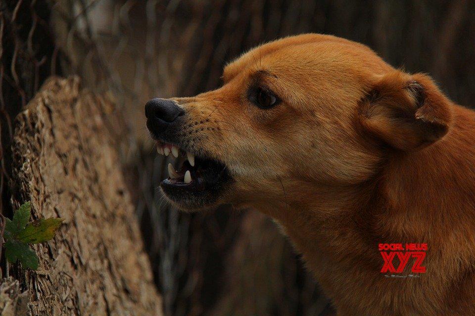 Telangana Home Guard risks life to save dog