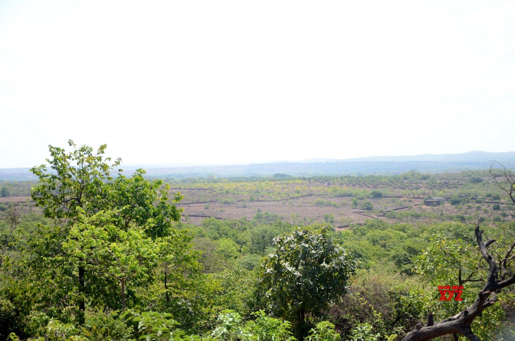Devgad: Vegetation in Sindhudurg #Gallery