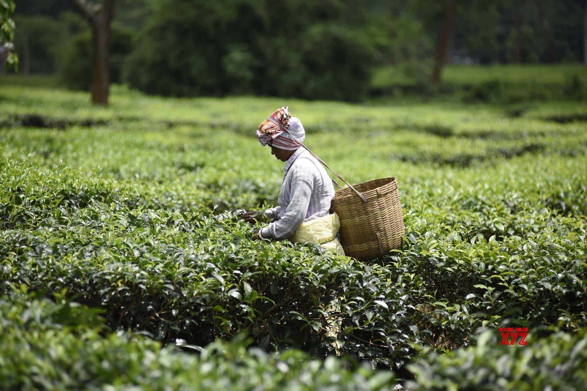 Shift to Assam, recruit from state, ULFA-I warns tea company