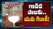Donkey's milk costs a bomb! - TV9 [HD] (Video)