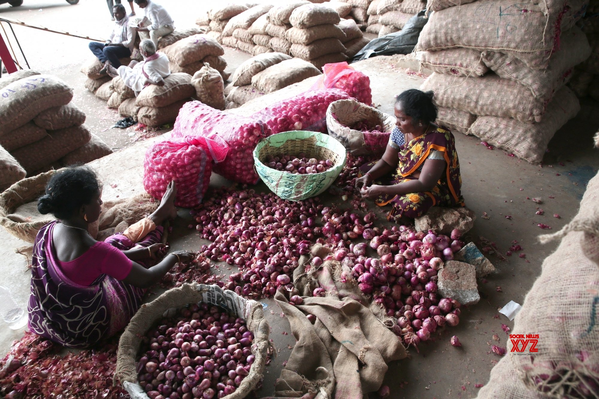 Govt cuts onion stockholding by 50% to check hoarding