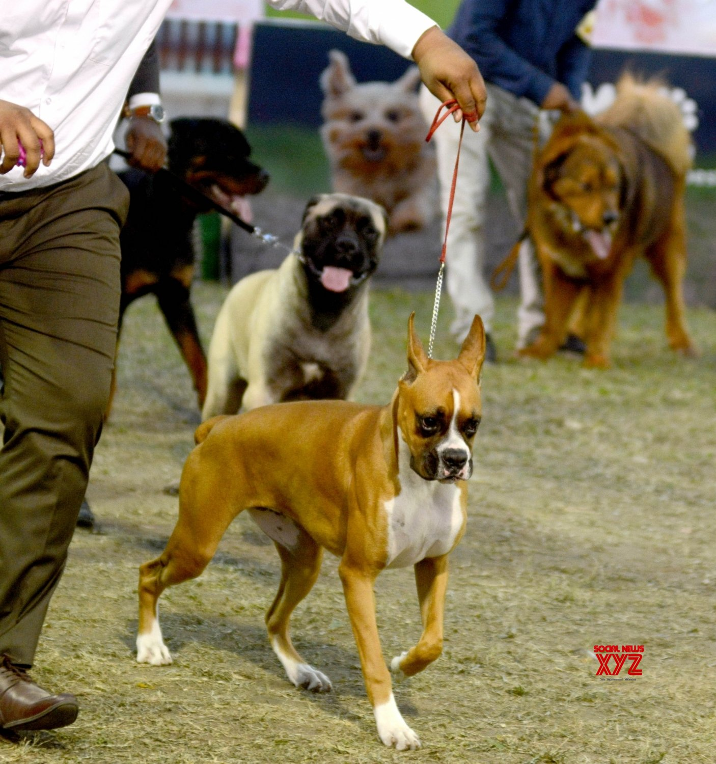 Kolkata: Dog Show #Gallery